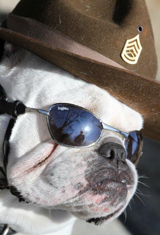 Gunny in DI Hat and Sunglasses