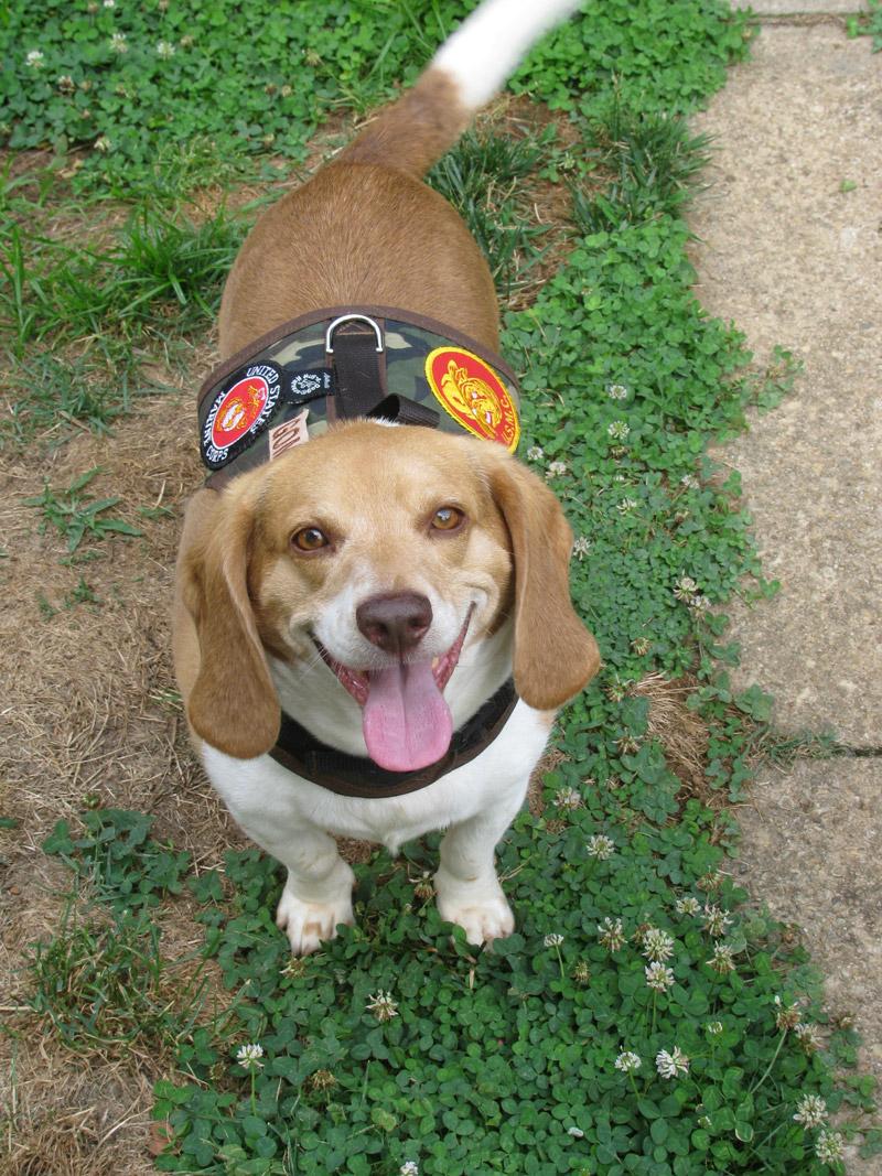 My Devildog Gomer