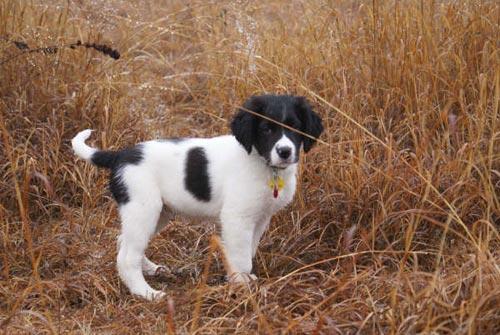 Jarhead Pup